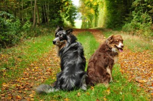 Hundepension Winterthur
